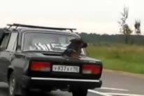 Descapotable canino