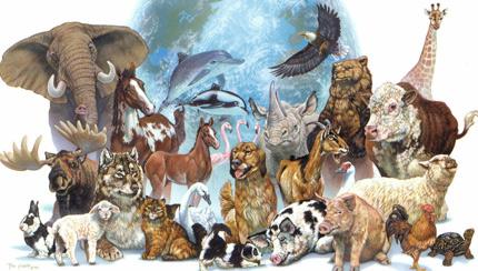 El mundo de los animales es muy divertido