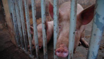 Los animales son los que mas injusticias sufren