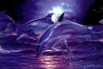 La panacea de la dieta delf�n