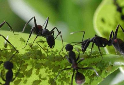 Como las hormiguitas