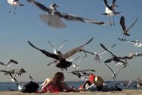 Aves acosadoras