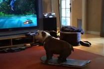 Perro con monopat�n
