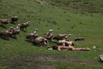 Funeral tibetano