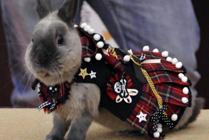 Conejos con ropa