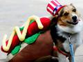 Disfraces caninos