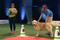 Desastre de perro