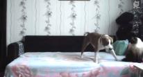 El perro tiene prohibido subirse a la cama