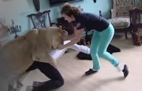 Leon casero ataca a un hamijo